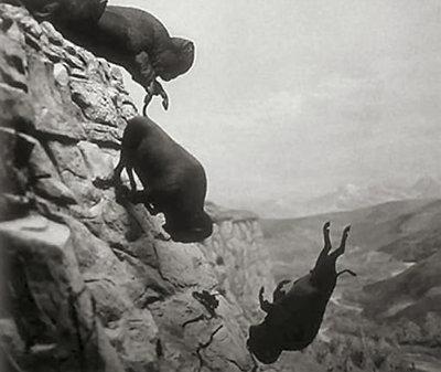 Buffalo photograph by David Wojnarowicz