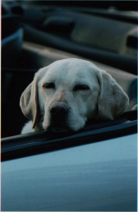 Rosie (1997-2008 [photo:Robert  Birnbaum]