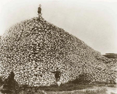 Genocide by Other Means: U.S. Army Slaughtered Buffalo in Plains Indian Wars .